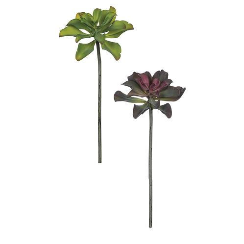 Echeveria Succulent Stem
