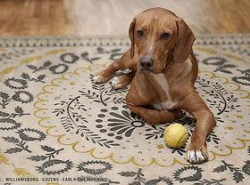 Spicher and Co dog.jpg