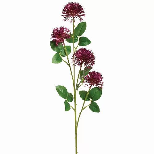 Allium Flower Stem in Purple