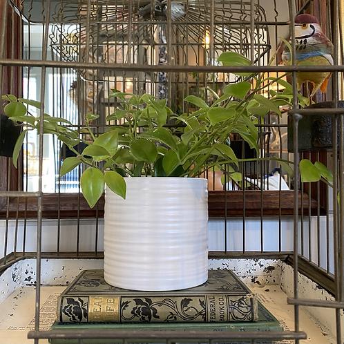 Everest Ceramic Pot