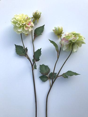 Dahlia Flower Stem