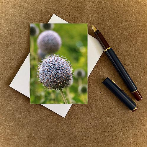 Globe Thistle Blank Mini Photocard