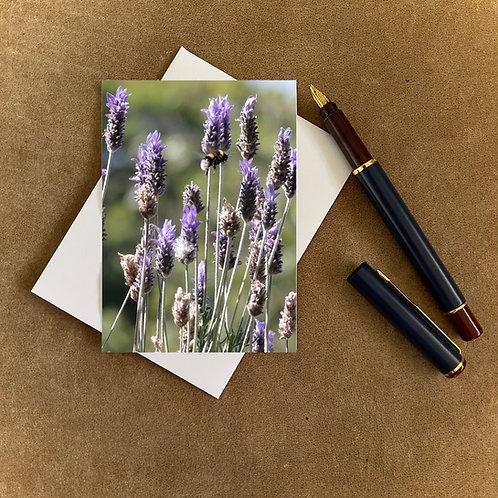 Lavender Blank Mini Photocard