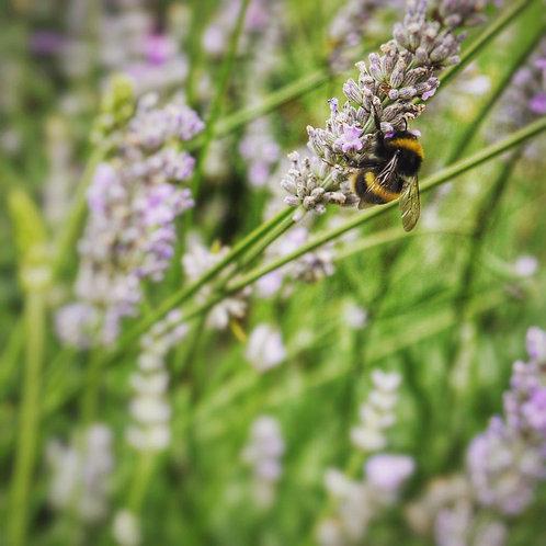 Busy Bee Notecard