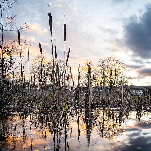 Sunset Pond Blank Card