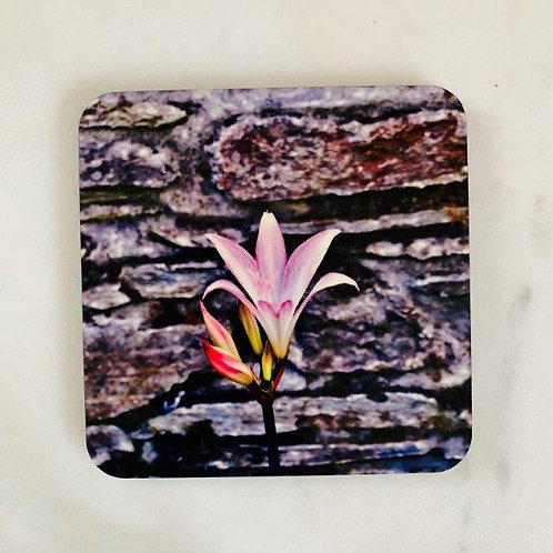 Pink Lilly Coaster