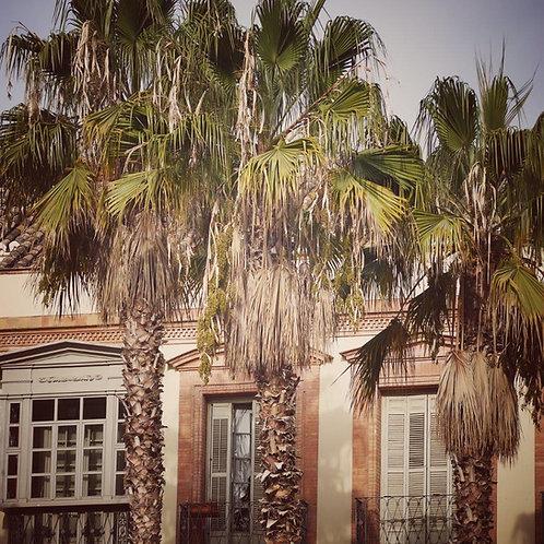 Palms Notecard