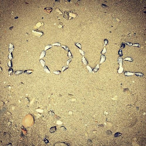 Love Shells Blank Card