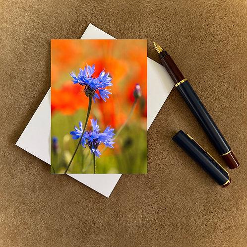 Poppies and Cornflower Blank Mini Photocard