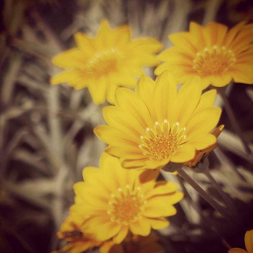 Yellow Daisy Notecard