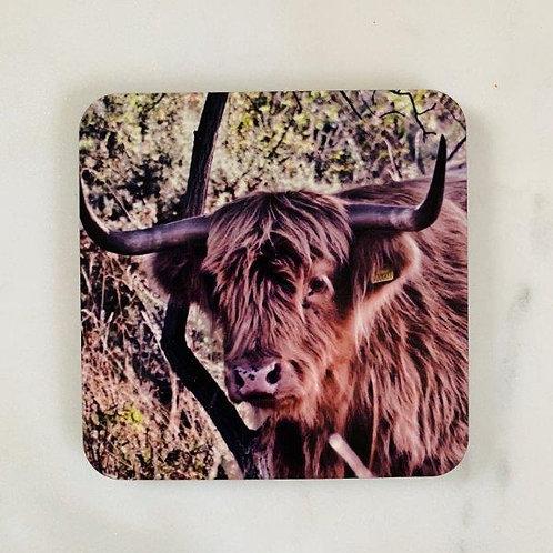 Highland Cow - Tan Coaster
