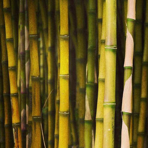 Bamboo Notecard