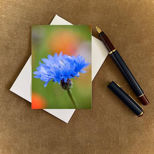 Cornflower Blank Mini Photocard