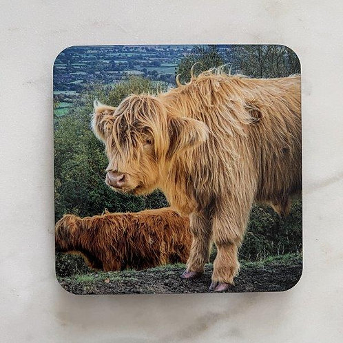 Highland Cattle on the Hills Coaster
