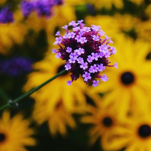 Purple on Yellow Notecard