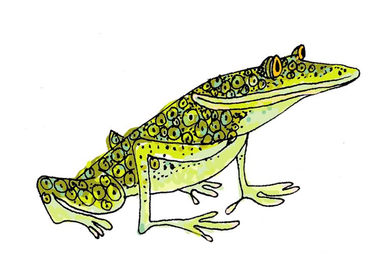 frogcolor.jpg