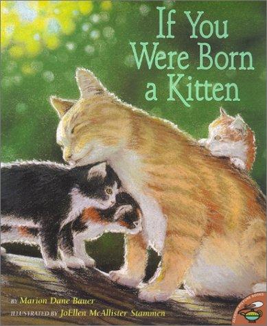 Bauer, kitten.jpg