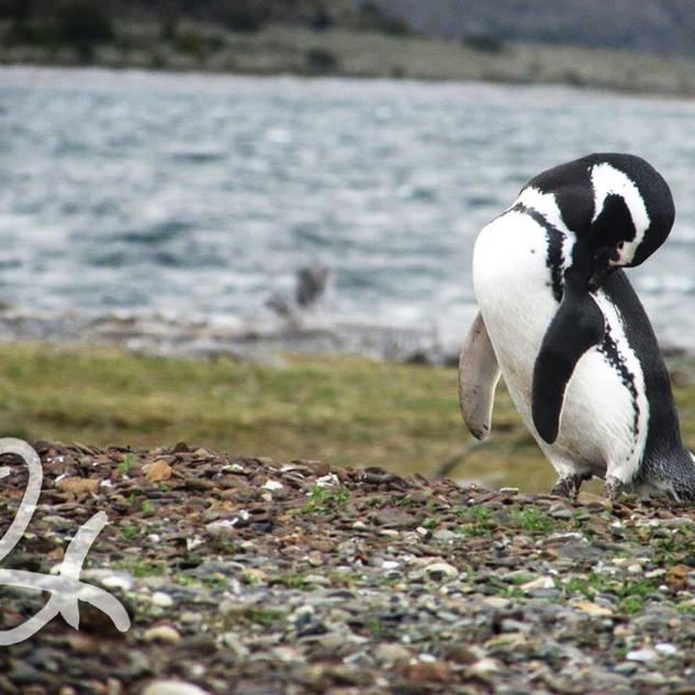Rebel Penguin