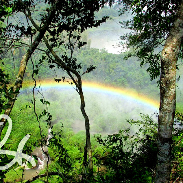 Trees Over Rainbow