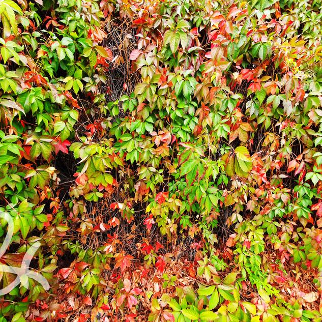 Leaves in London