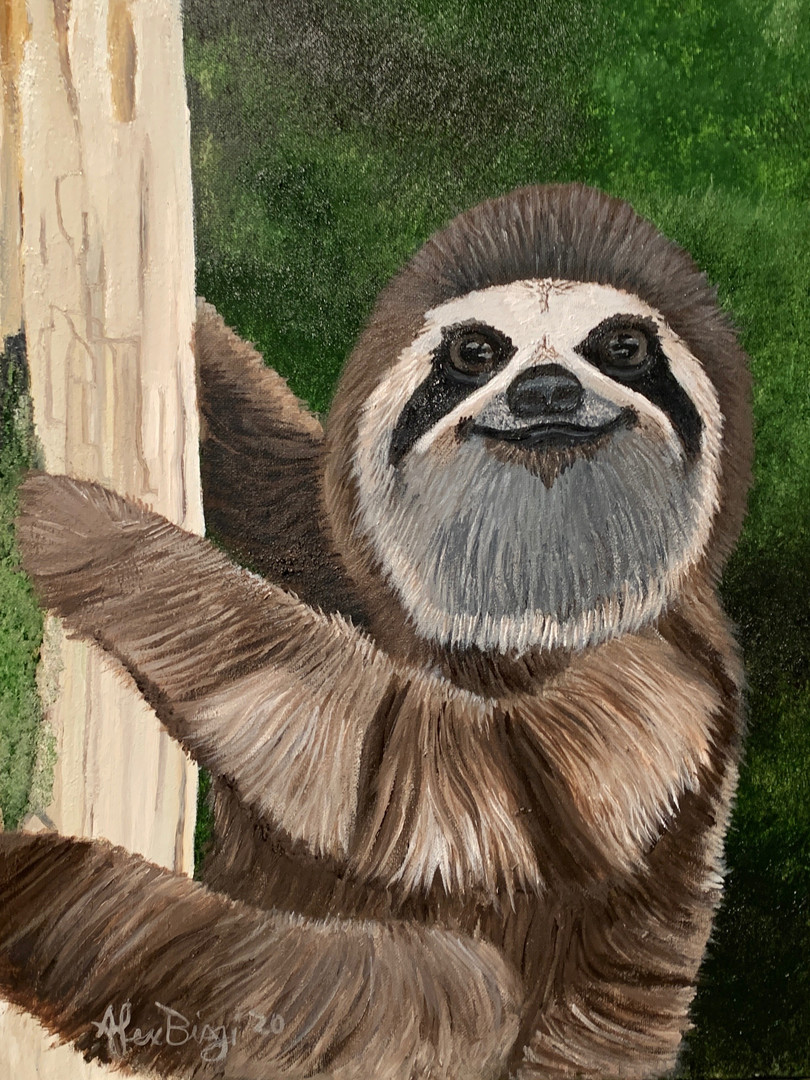 The Wise Sloth.jpeg