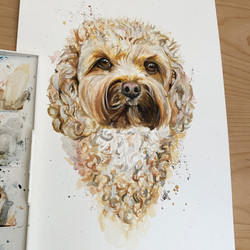 Loose Cockapoo