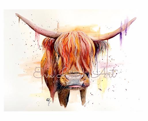 Original 'Highland Cow'
