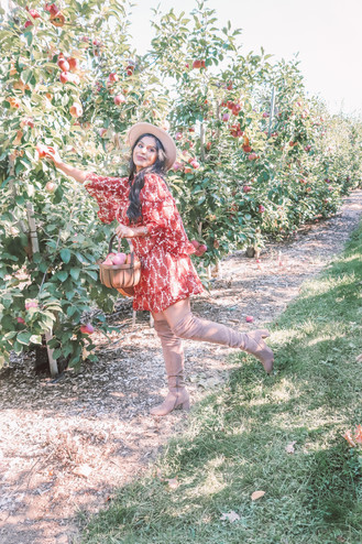APPLE PICKING IN BOSTON - A PERFECT FALL WEEKEND