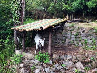 たまちゃんの屋根