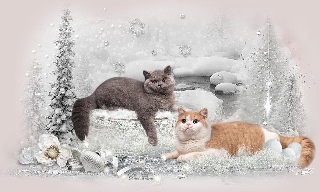 boys-winter.jpg