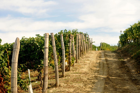 Azienda agricola Emilio Vada