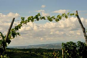 Le vigne