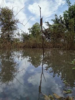 inondations recouvrant tous les arbres plantés