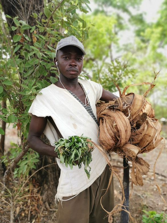 Sanga, coupeur de racines et de hanibahalo