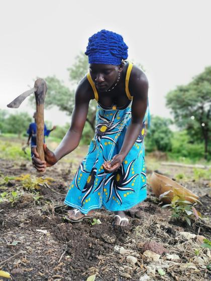 plantation d'arachides