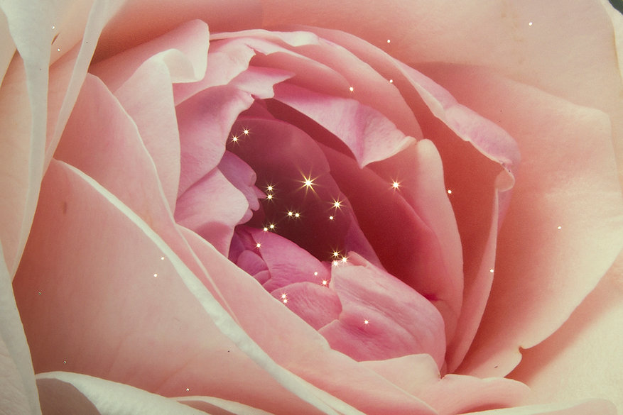 roseinside-small.jpg