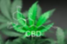 cbd store online