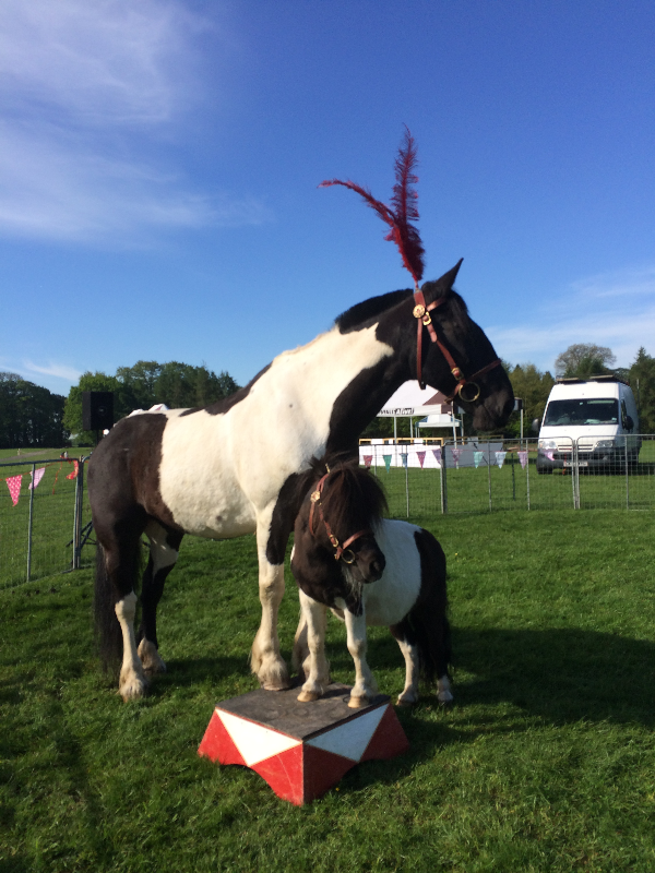 Billy and Magpie at Tatton Park