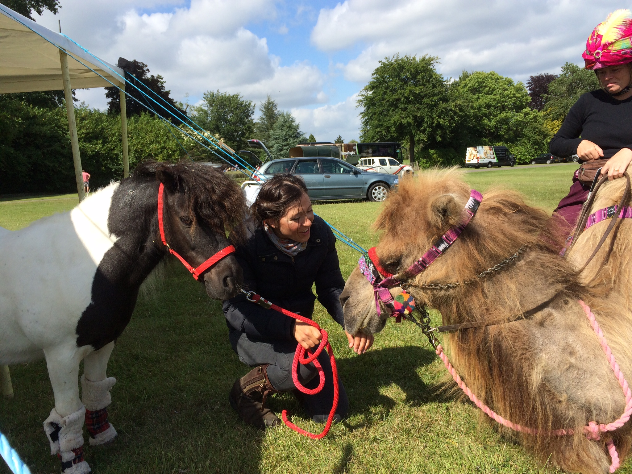 Billy and Timojen the Bactrian Camel
