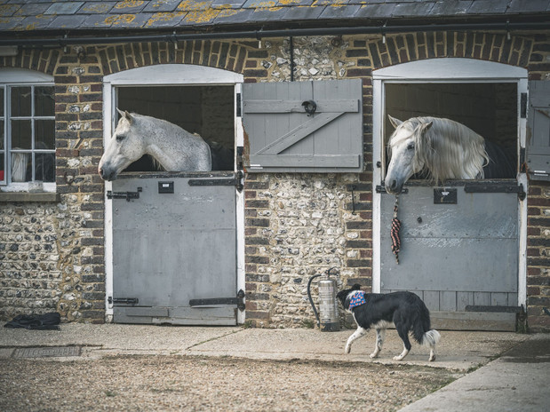 pedro and cecil in stable.jpeg