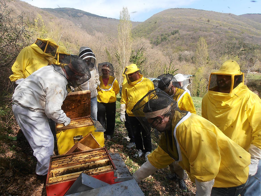 corsi-di-apicoltura05 BIS.jpg