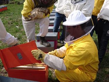 Corso di apicoltura di 1° livello anno 2018
