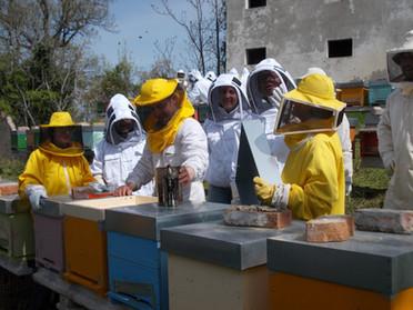 Corso di apicoltura di 1° livello 2017