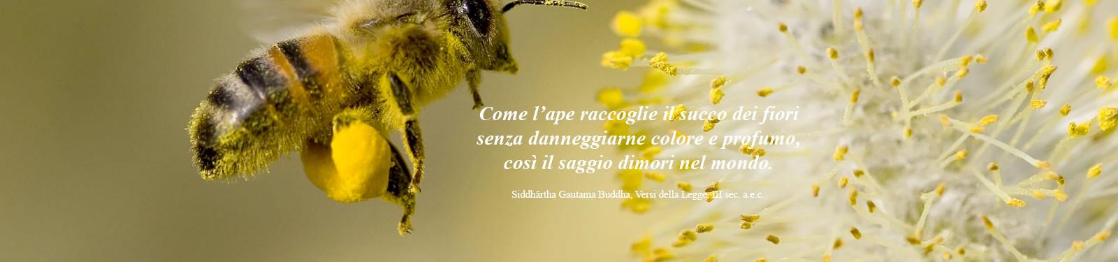 cooperativa-apicoltori-montani-scritta-1.jpg