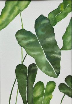 picky plant | SOLD
