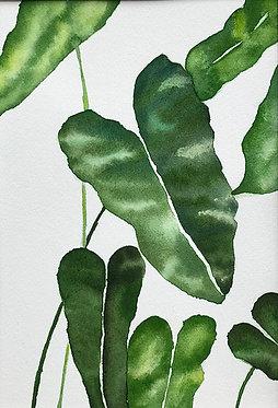 picky plant | 11x14