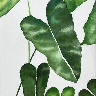 picky plant