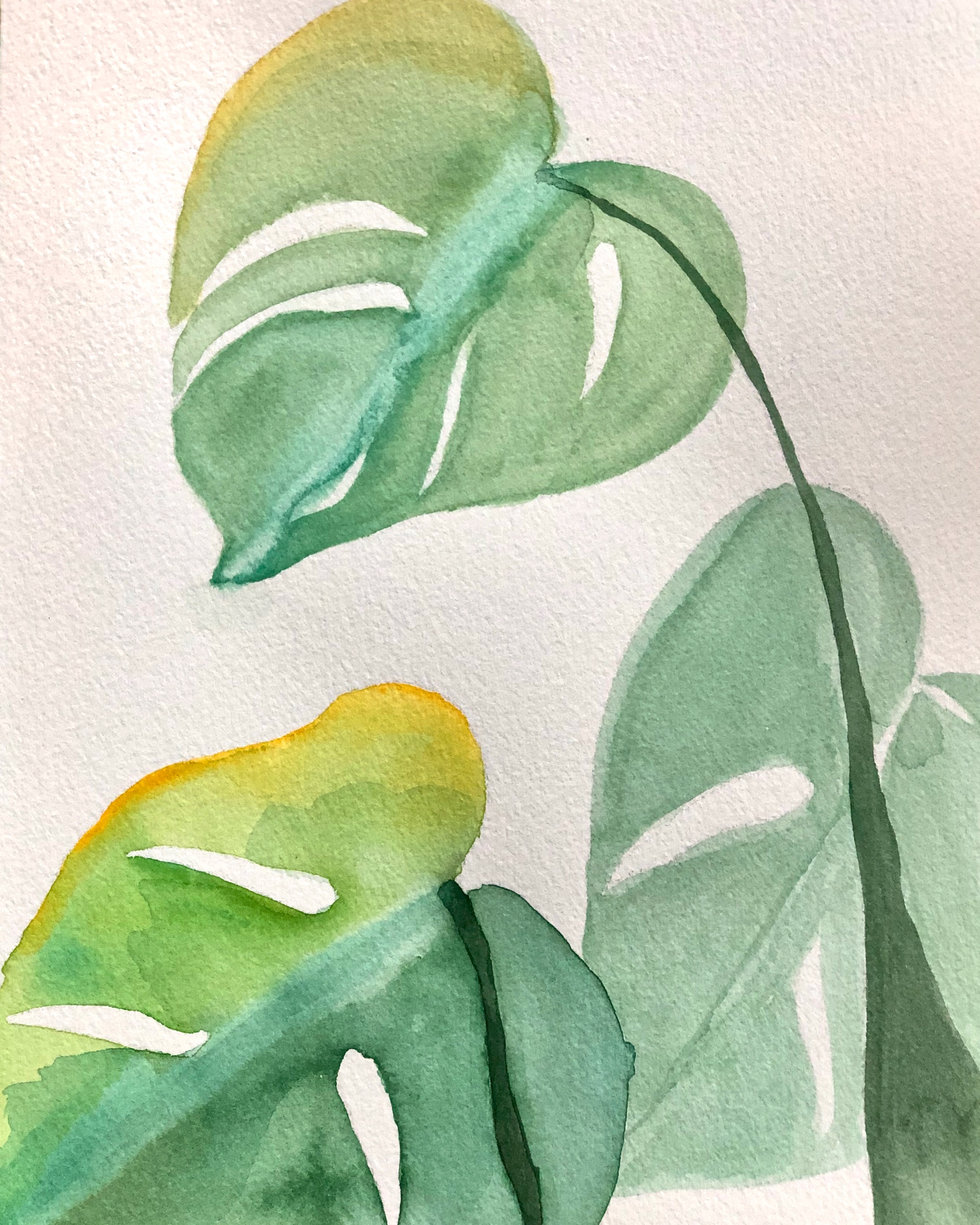 monstera, tres | sold