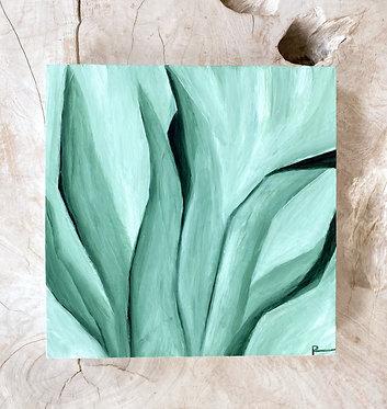 spider plant | 12 x 12