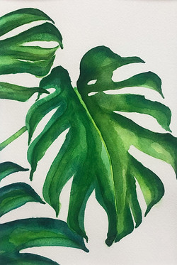 meet my monstera | available